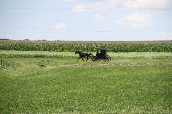 A horse and buggy traverse the race course